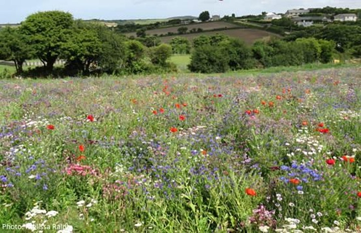 Cornwall: changing the scene for pollinators and people image
