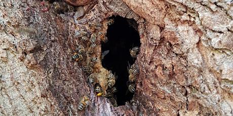 Wild Honey Bees - a talk by Daniel du Gard tickets