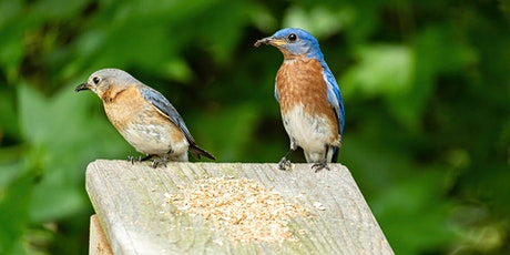 Build a Bluebird Nest Box- Interactive Virtual Workshop tickets