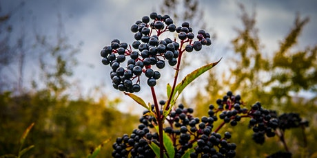 Cooking with Native Berries tickets