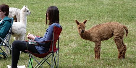 Meditating with Alpacas tickets