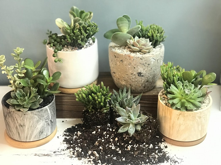 the flower shed's Succulent Planting Workshop @ R Dee Winery image