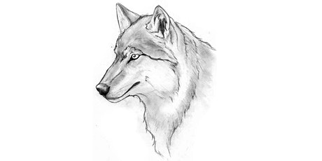 60min Animal Pencil Sketching Art Lesson - Wolf @11AM (Ages 6+) tickets