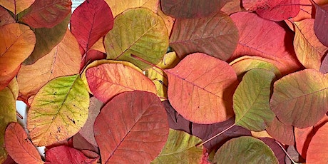 The true colour of the Cotinus online Eco-printing workshop tickets