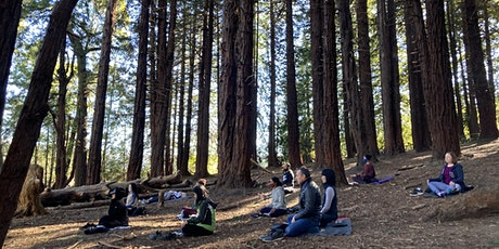 Hike & Meditation in Presidio Forest tickets