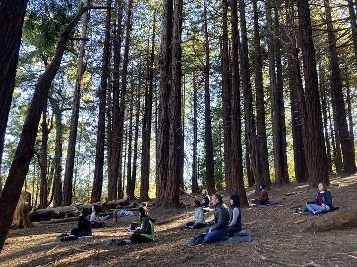 Hike & Meditation in Presidio Forest image