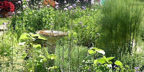 Open garden featuring habitats for insects, birds and bats tickets