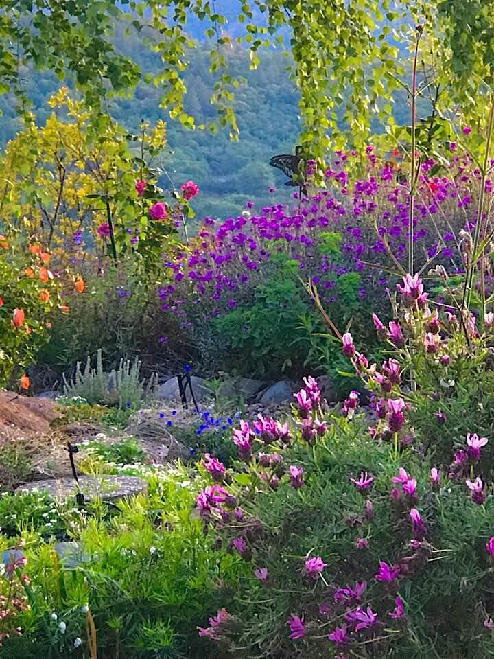 Healing the Land for Pollinators; Biodynamic Land Stewardship III image
