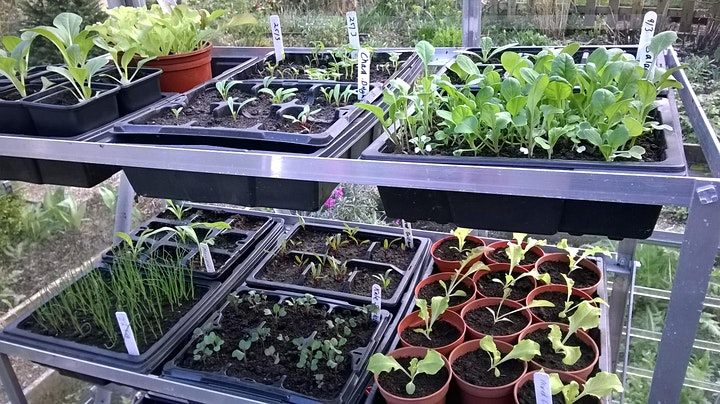 Grow Your Own (Part 2) Seed Sowing, Fruit and Herbs - Online Advice image