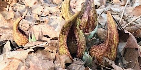 Skunk Cabbage Walk, Turkey Run State Park tickets