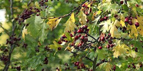 Visite guidée à travers l'Arboretum du Kirchberg - Parc Central & Réimerwee tickets