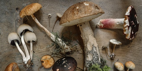The Basics for Growing Edible Mushrooms Outdoors (virtual) tickets