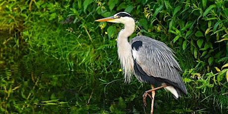 Expedition: Heron Rookery tickets