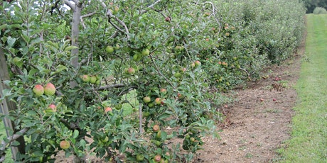 Fruit Trees: How to Start and Foster Your Home Orchard tickets