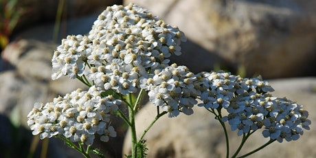 CRAGS online talk:  Native Plants in the Calgary Garden tickets