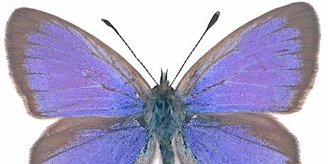 Native Butterfly workshop tickets