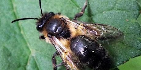 Bee & Hornet ID - Friend or Foe ? tickets