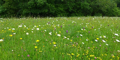 How to Create a Meadow tickets