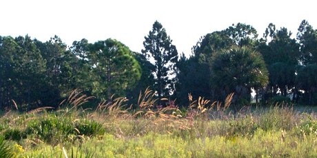 EcoWalk: Unique Preserves of Sarasota County: Scherer Thaxton Preserve tickets