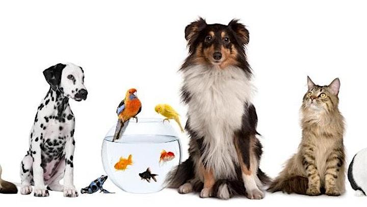 In Touch Animal - ätherische Öle und ihre sichere Anwendung bei Haustieren: Bild