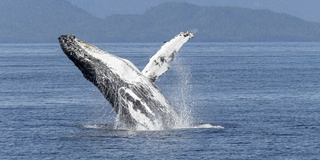 The Humpback Whale: An introduction to behaviour, biology and conservation tickets