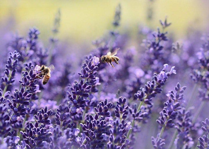 A short history of bees and flowers: the first 150 million years image