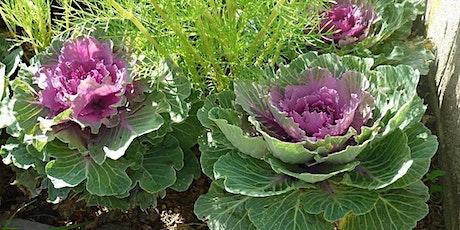 Field Botany Skills:  Identifying Wild Plants # 1 (6 in series) tickets