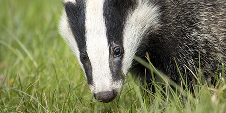 From Your Garden to the Coast; Mammal Tracking & Field Signs Workshop tickets
