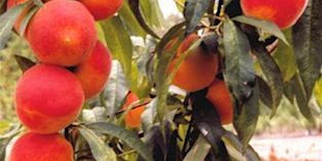 Fruit Trees for Central Florida - Zoom Virtual Class tickets
