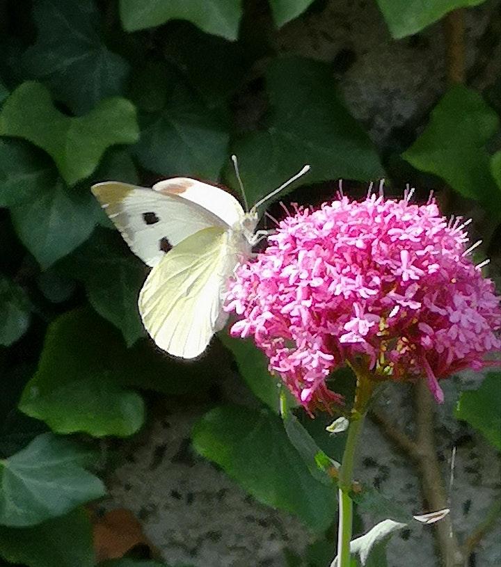 Gardening for Wildlife image