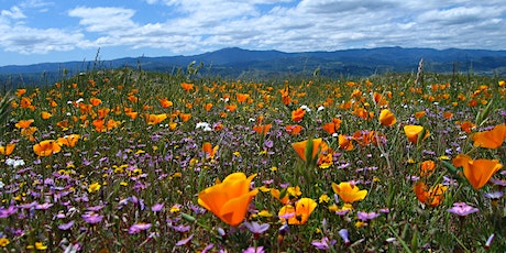 Wonderful Wildflowers Virtual Hike tickets