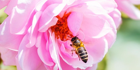 Planting for Pollinators - Online Class tickets