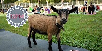 Goat+Yoga++%28late+session%29