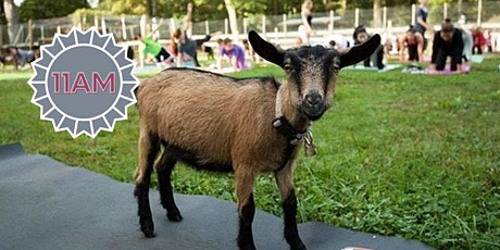 Goat Yoga  (early session) tickets
