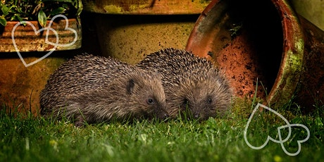 The British Hedgehog - ONLINE course tickets