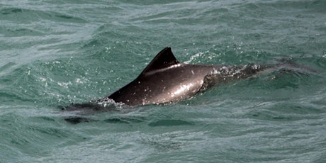 The Biology and Behaviour of Harbour Porpoise (re-run) tickets