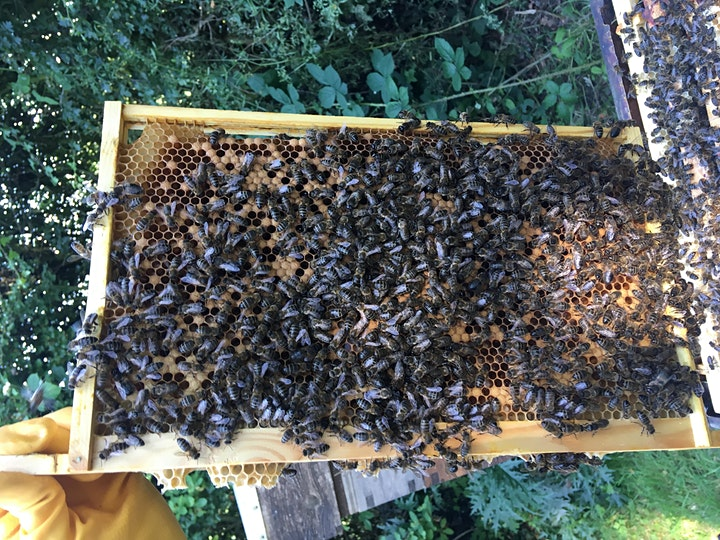 Bee Happy- An Introduction to Bees and Beekeeping image
