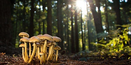 The Fascinating World of Fungi with Lacey Roberts. tickets