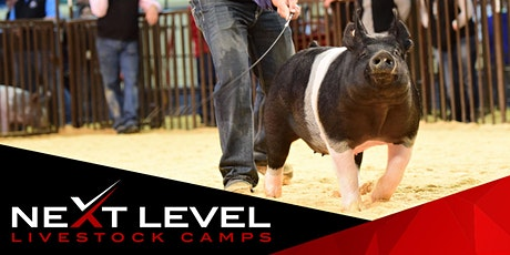 NEXT LEVEL SHOW PIG CAMP | March 27th & 28th | Afton, Iowa tickets