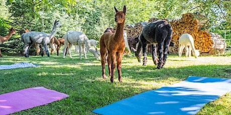 Alpaka Yoga Solothurn-Selzach Tickets