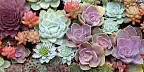 2 Gals In a Garden- Succulent Easter Bonnet! tickets