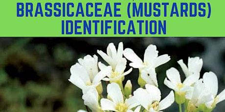 Brassicaceae (Mustards) Identification tickets