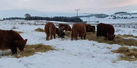 Mob Grazing Q&A: Outwintering to reduce inputs tickets