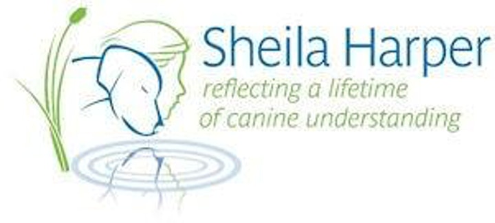 Trent Talks with Sheila Harper: Dog Walking and Nature Connection image