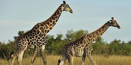Kenya Safari Preview Night entradas