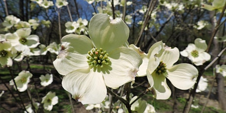 Native Trees for Your Garden and Neighborhood tickets