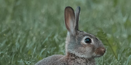 Painting woodland animals  for children and young people-Hare tickets