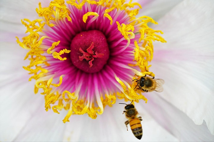 Flight of the Honey Bee - Story Time with Ecology Centre image