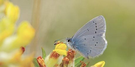 British Butterflies tickets