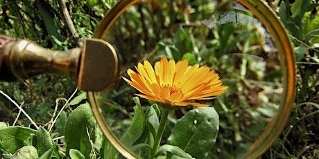 Plant ID Tips & Tricks - Ready, Set, Garden! tickets